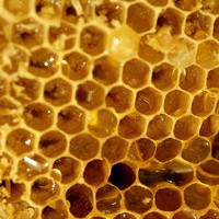 Learning from the Bees – Part 1
