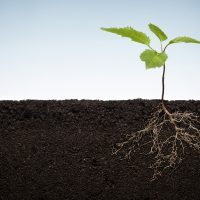 Springtime Prayer – Praying for Roots as Well as Branches