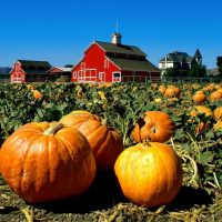 Welcome October's Beauty with Family Fun and Celebration
