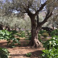 Gethsemane and the Way of the Press