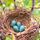 Always Make a Nest