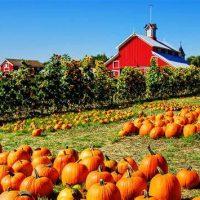 Pumpkin Patch Perspectives